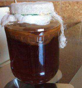 Чайный гриб, тибетский кефирный гриб
