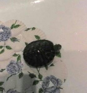Продам красноухих черепах.