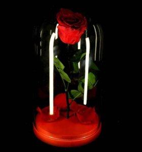 Вечная роза в колбе - красавица и чудовище