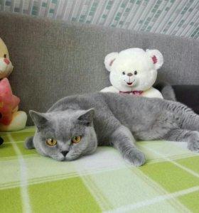 Кот для вязок🐈
