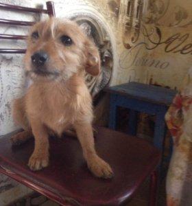 Бесплатно подрощенный щенок, возраст 4 месяца