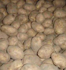 Деревенский картофель. Доставка.