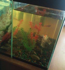 Рыбки , аквариум , грунт