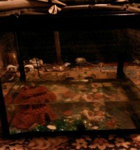 Аквариум для рыбок и черепах.