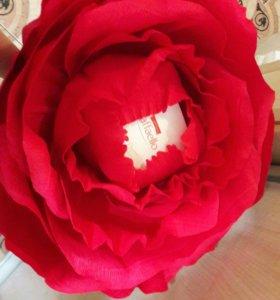 Гиганская роза с коробочкой рафаэлло