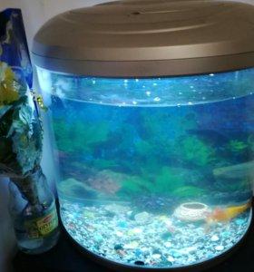 Панорамный аквариум 80л