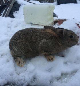 Продам кролей