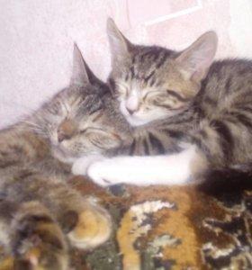 Кошка(мама) котёнок(мальчик)
