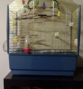 Два волнистых попугайчика с клеткой