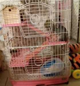 Шиншилла с собственным 3-х этажном домом(клетка)