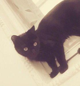 Котёнок Багира