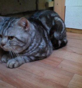 Котята от 2000,вязка 1500