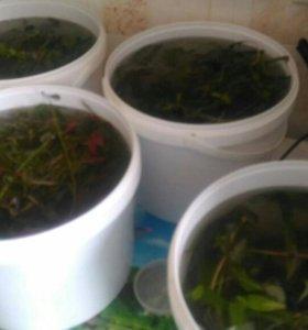 4ведра растения