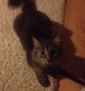 Кошка Тося