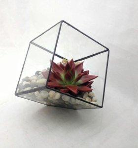 Геометрические флорариумы с суккулентами