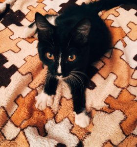 Очень Ласковая кошка в добрые руки!