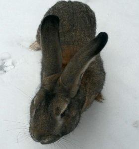 Кролики и утки