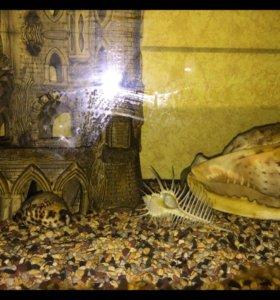Juwel аквариум 300л