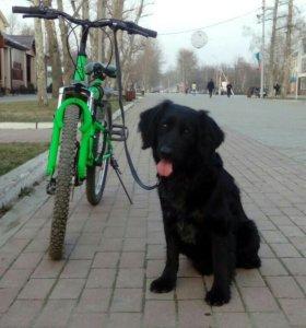 Выгул и дрессировка собак