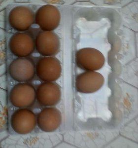 Яйцо куриное недорого