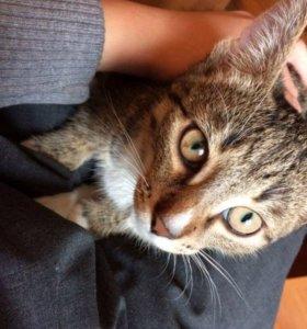 Котёнка в добрые руки