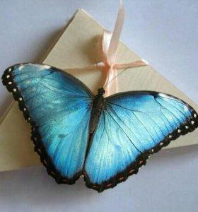 Живые тропические бабочки в Казани в подарок