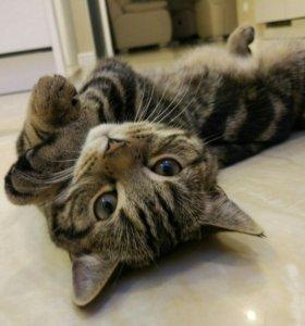Котенок Тимоша