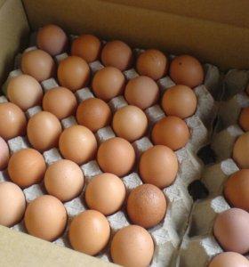 Бройлеры,Инкубационное яйцо