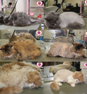 Стрижка кошек любой сложности без наркоза