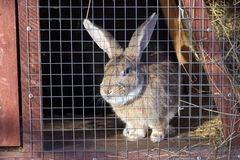 Кролики домашнии
