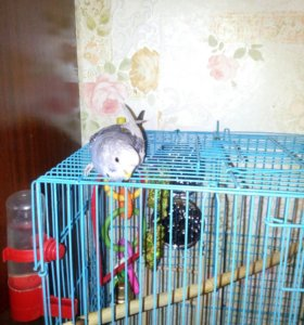 Продам попугайчика вместе с клеткой