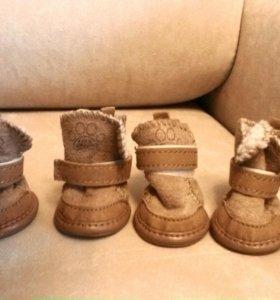 тапки- угги для маленькой собачки