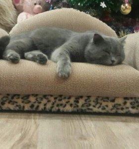 Шикарный диван для кота или собачки