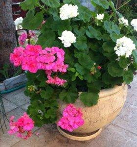 11 глиняных вазонов для цветов