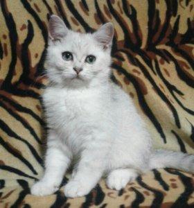 Котик Вензель