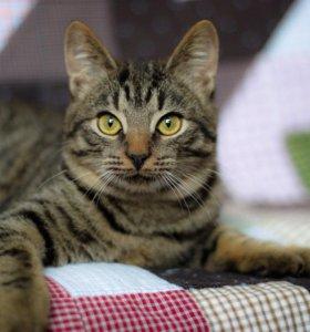 Котёнок - подросток Федя в добрые руки, 8 мес.