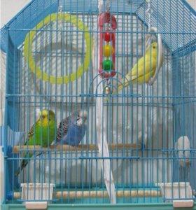 Клетки для попугайчиков.
