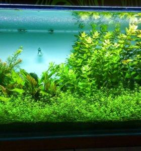 Имеется излишки аквариумных растений.