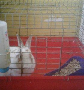 Кролик с клеткой и приданным