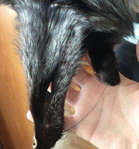 Меховая жилетка натуральная лиса