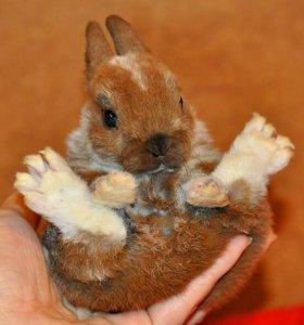Плюшевый миниатюрный кролик