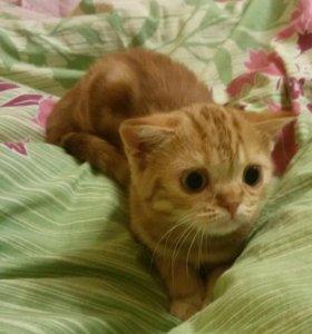 Котенок ждет хозяев