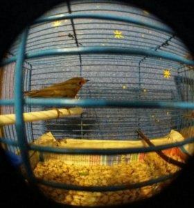 Певчая птичка) для души ) и орнитологические сети.