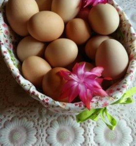 Яйца домашние экологически чистые