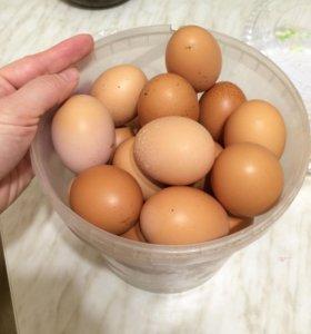 Яйца куриные домашние свежие, деревенские