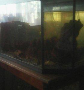 Аквариум с аксесуарами и 4 рыбки