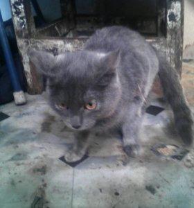 Кошка. Зовут. Сара