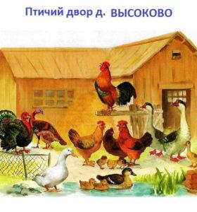 Инкубационное яйцо,цыплята.