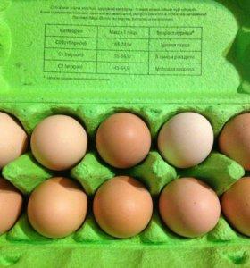 Яйца на еду и инкубацию