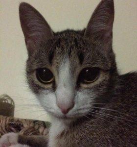 Кошка ищет кота, желательно бенгальской породы